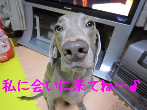 IMG_5190_convert_20101020231205.jpg