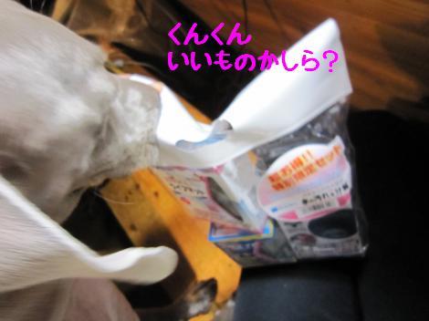 IMG_5262_convert_20101027133434.jpg