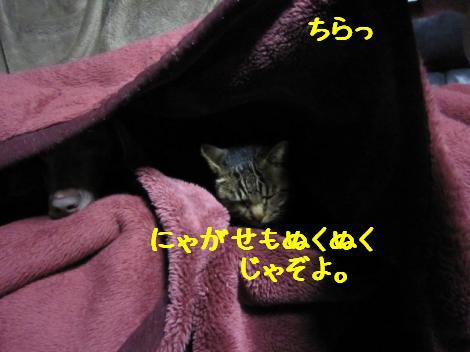 IMG_5289_convert_20101030223656.jpg
