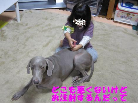 IMG_5376_convert_20101101102710.jpg