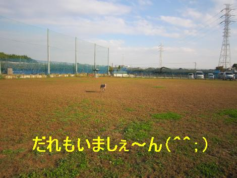 IMG_5483_convert_20101107113820.jpg
