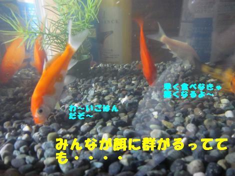 IMG_5592_convert_20101111140502.jpg