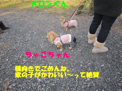 IMG_5725_convert_20101122114802.jpg