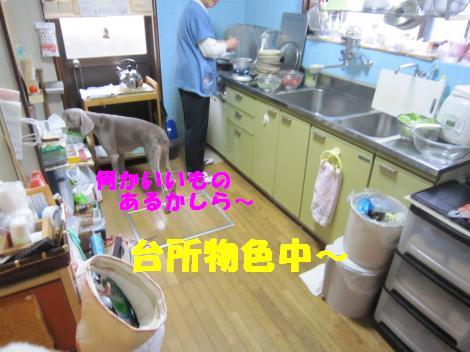 IMG_5789_convert_20101129105054.jpg