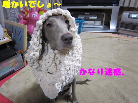 IMG_5807_convert_20101129111306.jpg