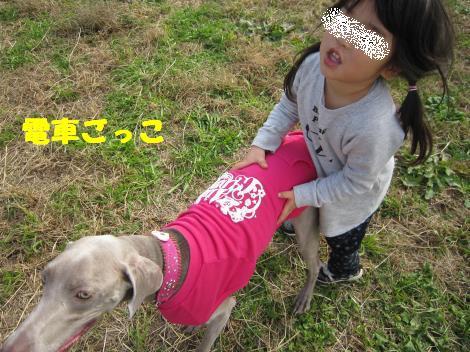 IMG_5900_convert_20101206110831.jpg