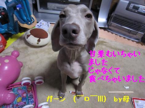IMG_5949_convert_20101208000535.jpg