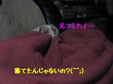 IMG_6074_convert_20101211233531.jpg