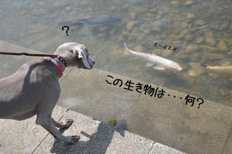 そういえば、魚は初めて見るかもね