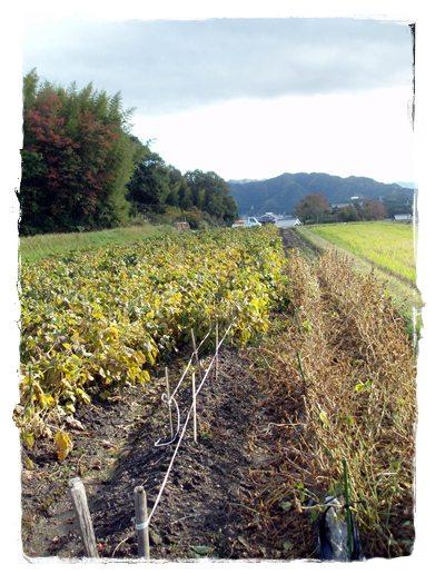 2009・11・3・篠山(AKKOさん夫婦)4