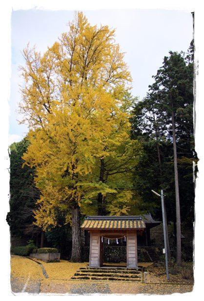 いちょうの木3