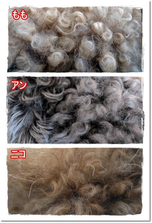 2013・1・20・毛質