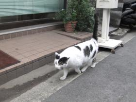 猫町の猫さん3