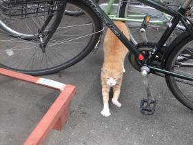 猫町の猫さん2