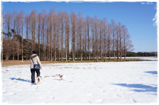 雪原を行くっ