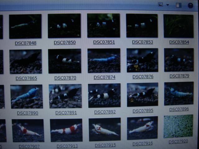 DSC07922aa.jpg