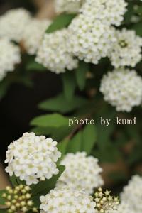 IMG_9024.jpg