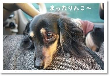 daisyugou3.jpg