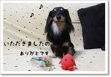 daisyugou4.jpg