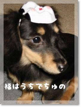 fukuwauthi.jpg