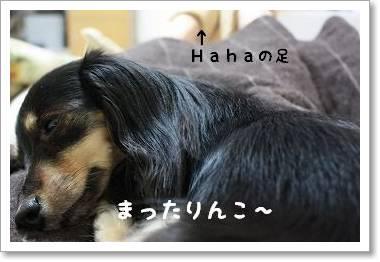 hahanoashinouede.jpg