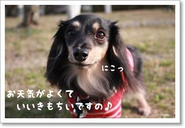 harunoosanpo2_314.jpg