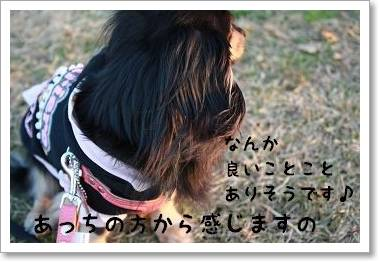 yakiimonoosanpo.jpg