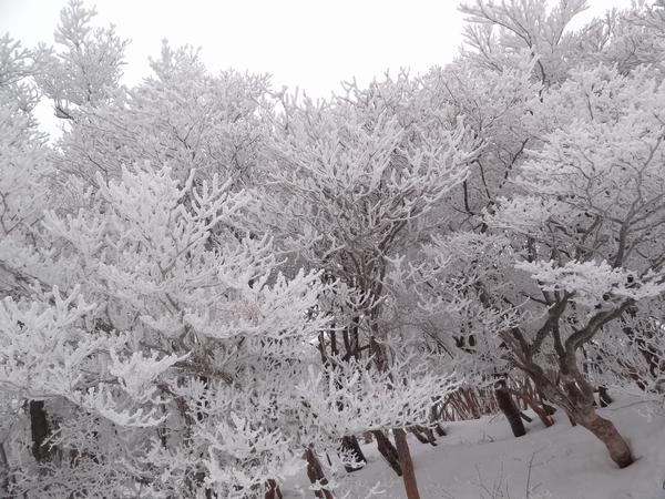 DSC00113樹氷林