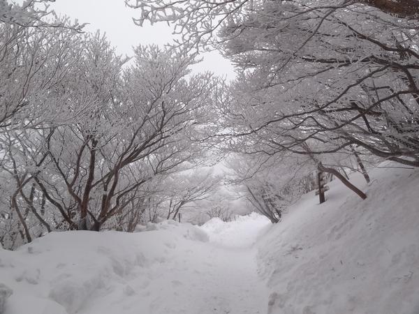 DSC00110雪の道