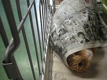 人気 猫ブログ 4匹の猫友