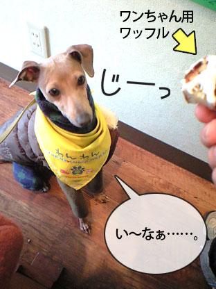 091219yami04.jpg