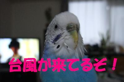 台風が来てるぞ!