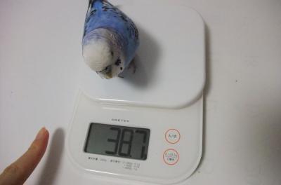 38.7㌘