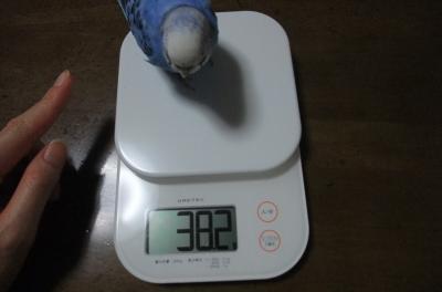38.2㌘
