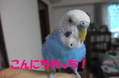 こんにちわっち !