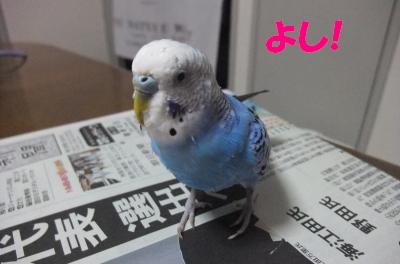 こんにちわっち!