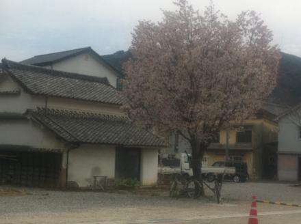 蔵と桜_convert_20110409155415