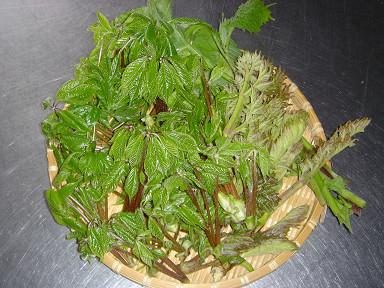 山菜1451