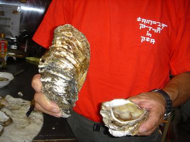 男鹿の岩牡蠣682