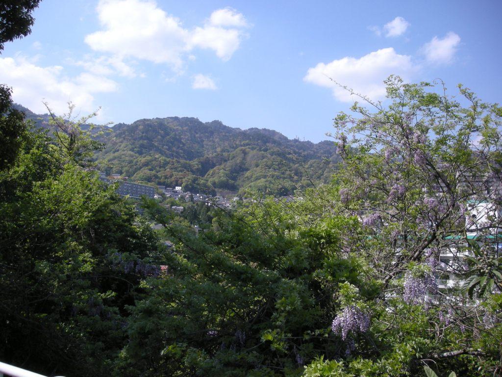 六甲山を背景に藤の花