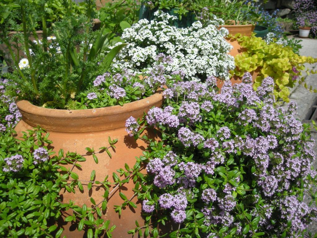 ガーデニングの花々(1)