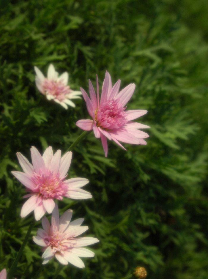 身近に咲く花 034