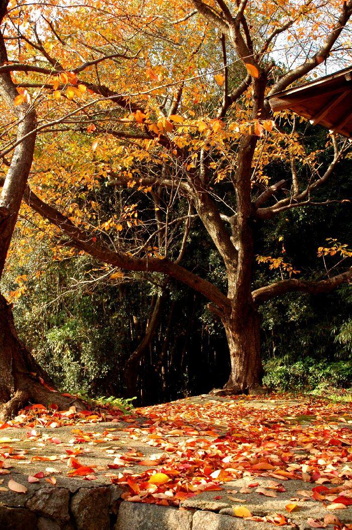 滝宮の秋5