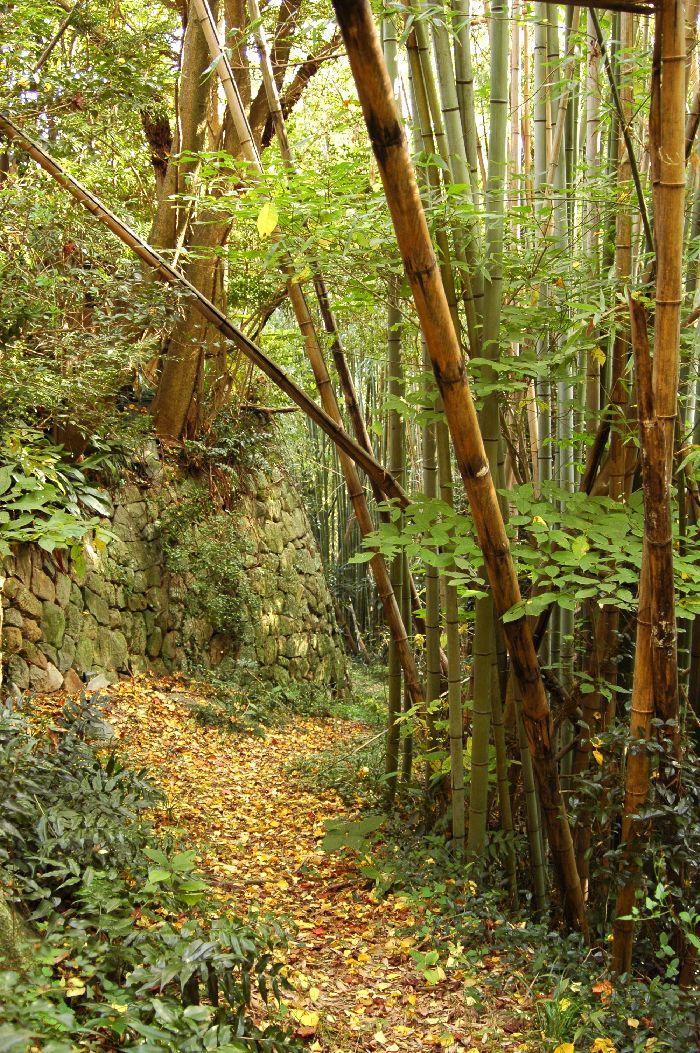 四国カルスト・剣山・山本町 281