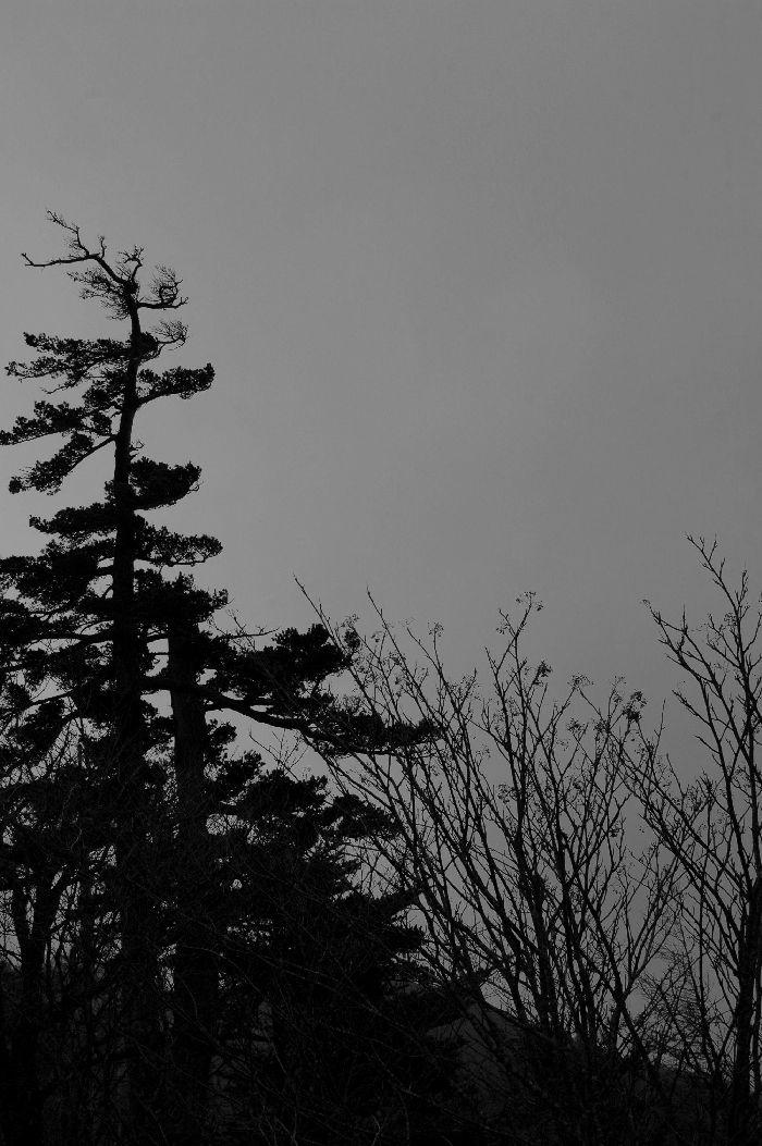 コピー ~ 四国カルスト・剣山・山本町 176