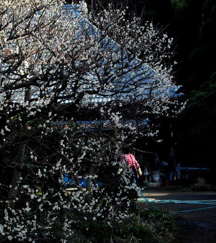 舞岡公園 005