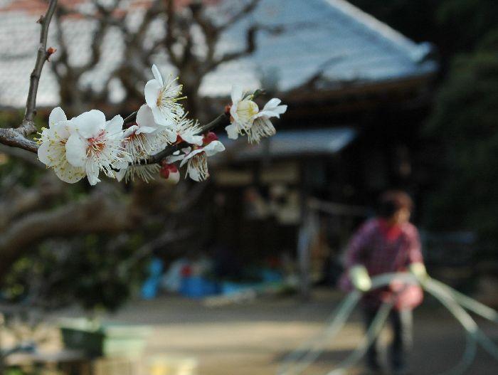 舞岡公園 004
