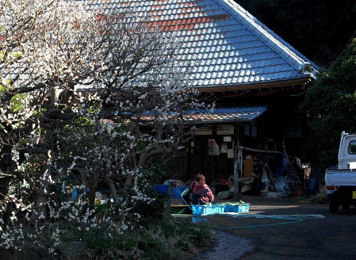 コピー ~ 舞岡公園 010