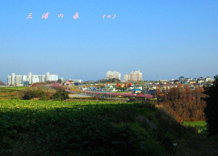 三浦の桜小松池 200