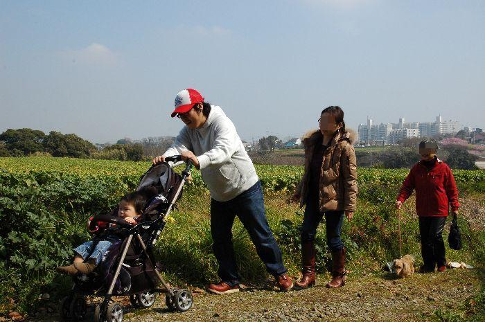 三浦の桜小松池 332
